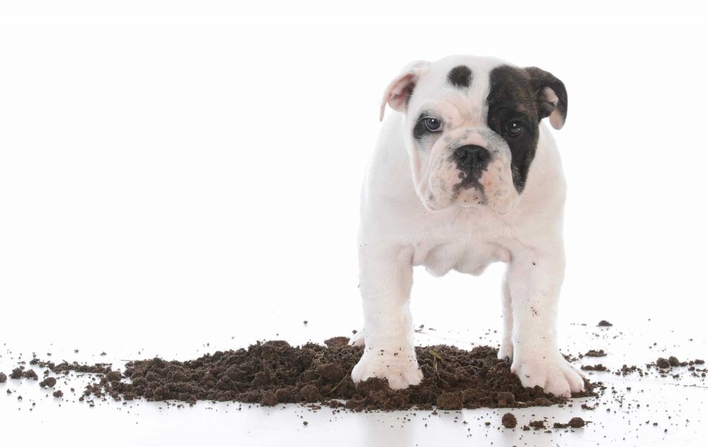 How To Keep Your Dog From Destroying Yard With Landscaping